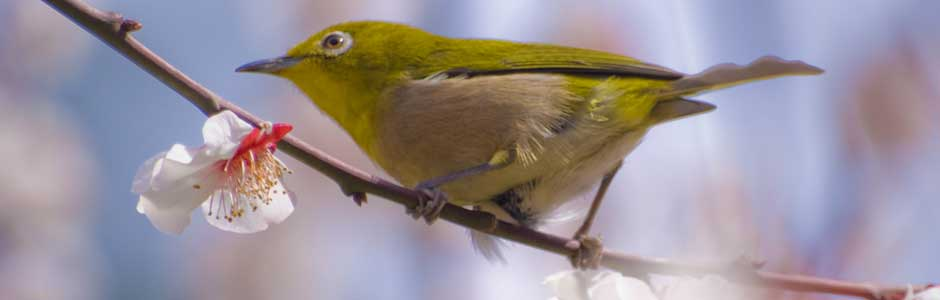 white eye